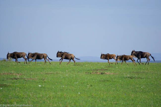 Kenya, Masai Mara, Wildebeest Migration