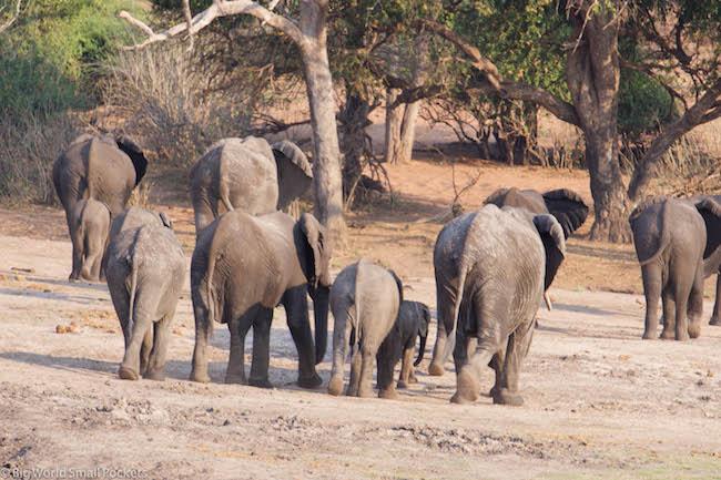 Botswana, Chobe National Park, Elephant Bottoms