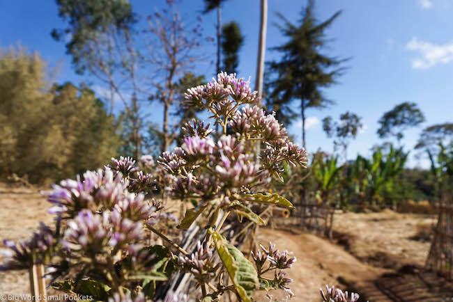 Ethiopia, Dorze Village, Flowers