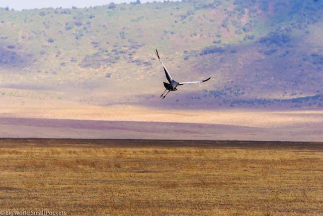 Tanzania, Ngorongoro Crater, Bird