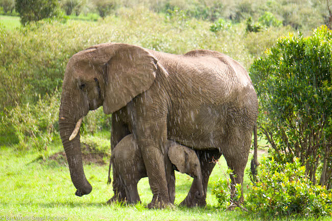 Kenya, Masai Mara, Elephant Rain Shelter