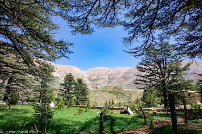 Lebanon, Cedars, Reserve, Springtime