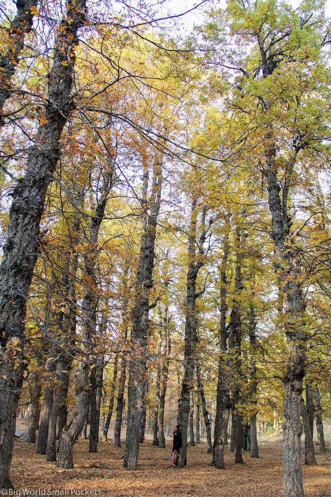 Lebanon, Aakkar, Amousa Forest