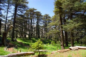 Lebanon, Cedars, Landscape