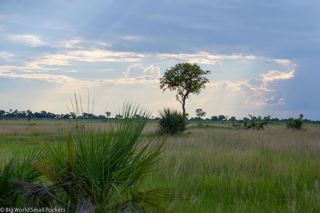 Botswana, Okavango Delta, Tree