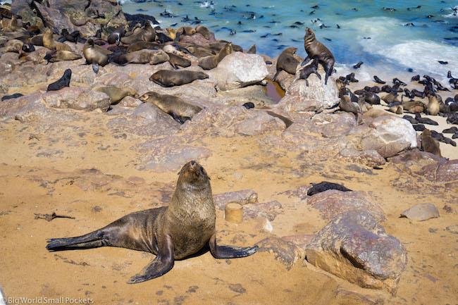 Namibia, Cape Cross, Seal Colony