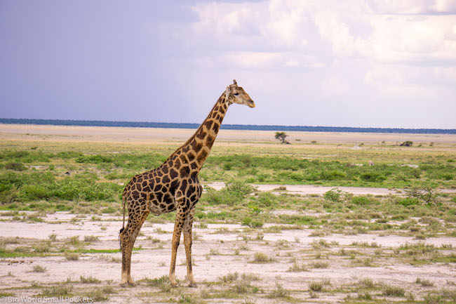 Namibia, Etosha NP, Giraffe