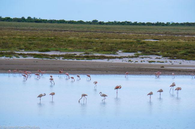 Namibia, Etosha, Flamingos