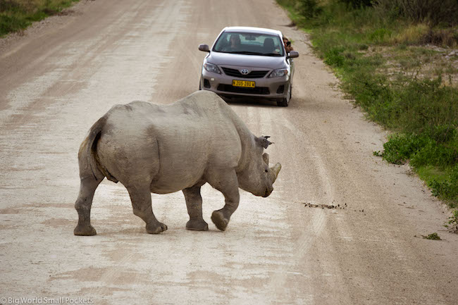 Namibia, Etosha, Rhino Crossing the Road