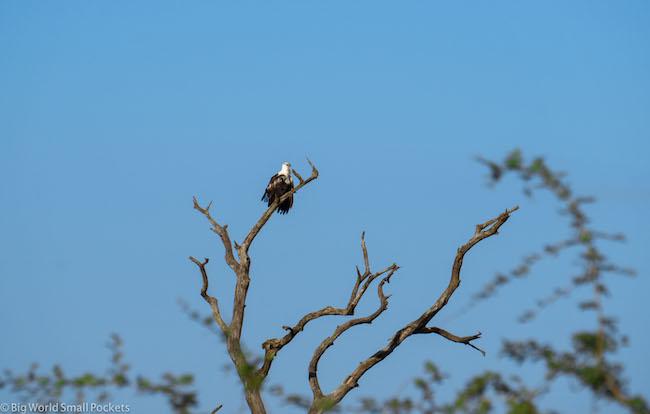 Swaziland, National Park, Eagle