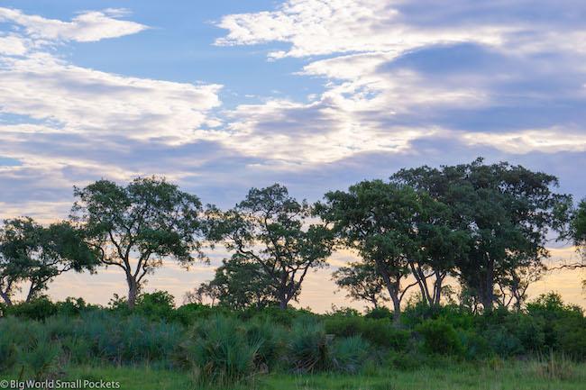 Botswana, Okavango Delta, Trees