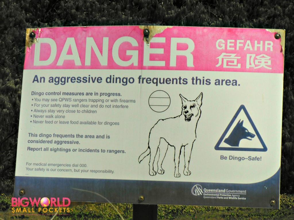Danger Dingo