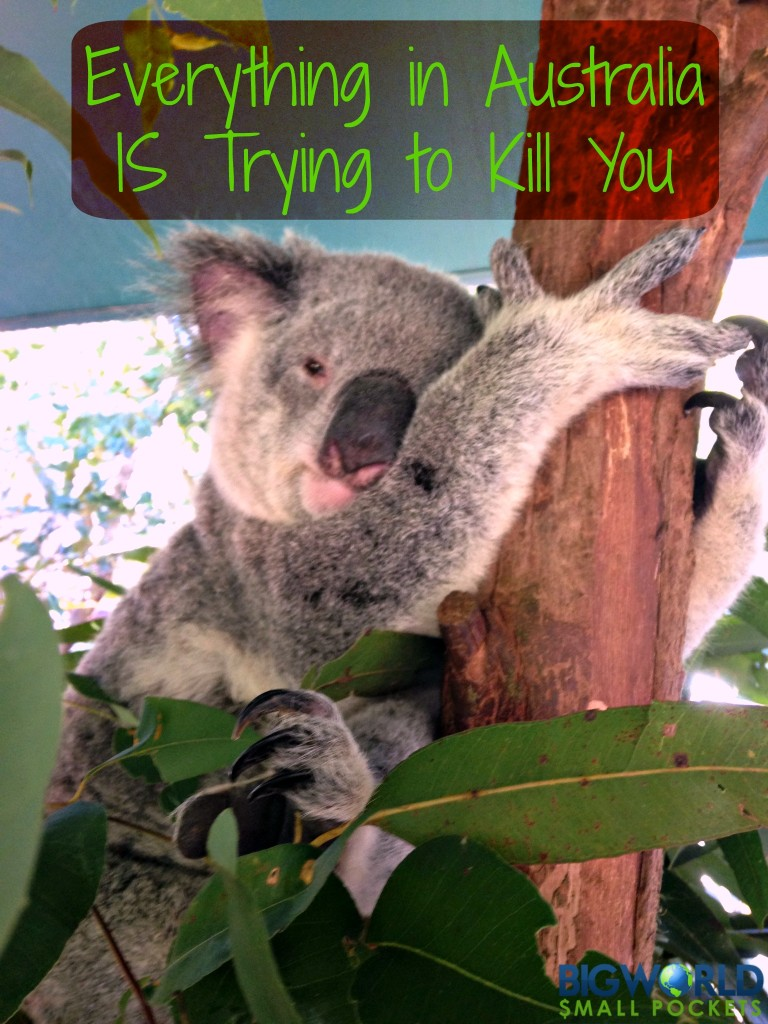 Everything in Australia is Trying to Kill You {Big World Small Pockets}