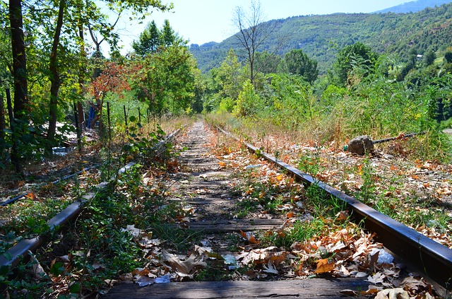 Albania, Railroad, Forest