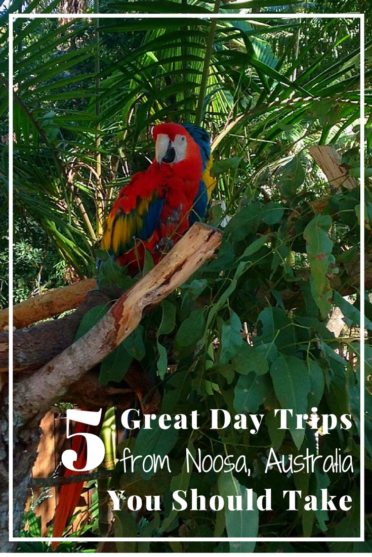 5 Great Day Trips from Noosa, Australia You Should Take {Big World Small Pockets}