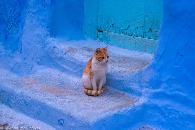 Morocco, Chefchaouen, Cat