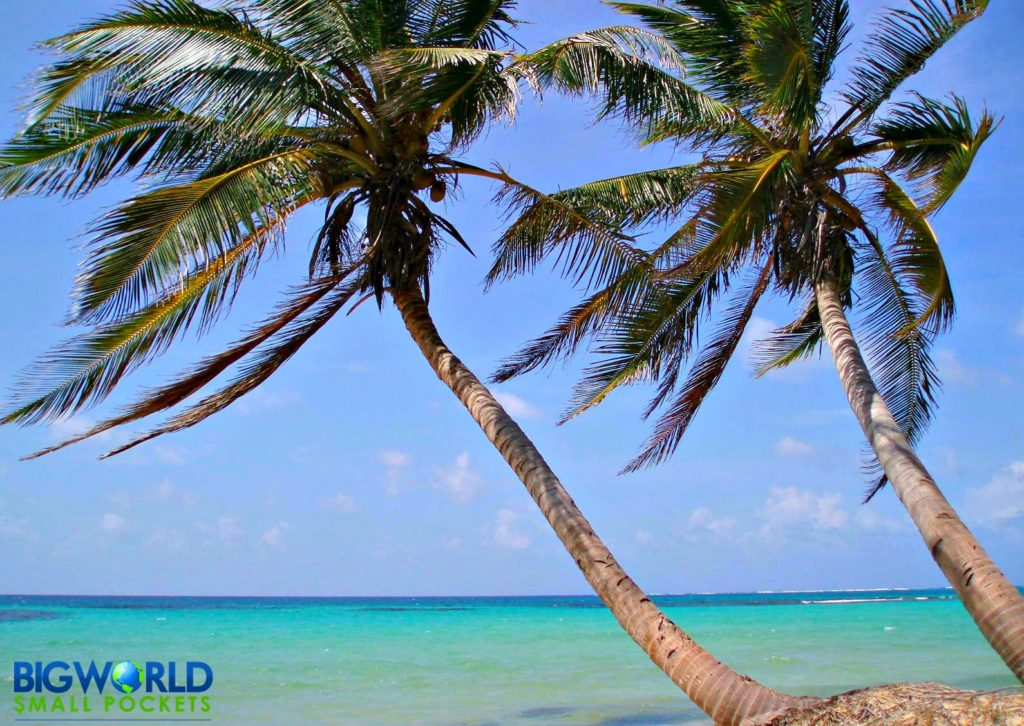 Nicaragua, Little Corn Island, Palm Trees