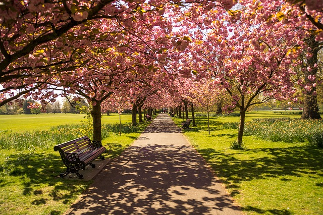 England, London, Hyde Park