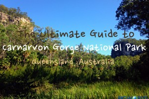 The Ultimate Guide to Carnarvon Gorge National Park
