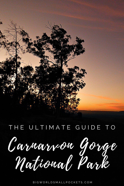 Ultimate Guide to Carnarvon Gorge National Park