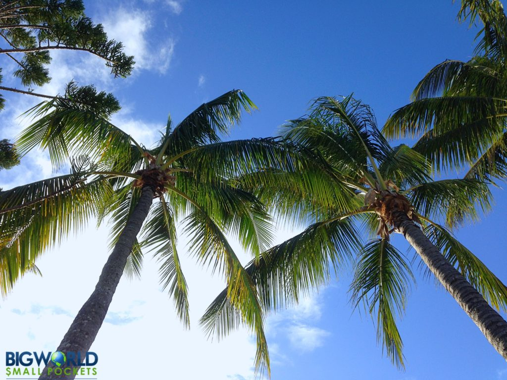 Palm Trees Airlie