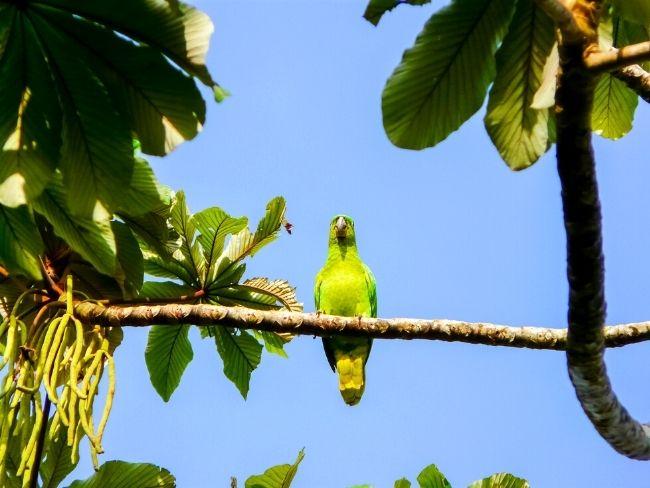 Central America, Costa Rica, Bird