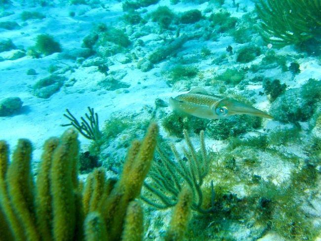Costa Rica, Dive, Fish