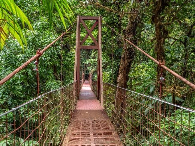 Costa Rica, Monteverde, Tree Walkl