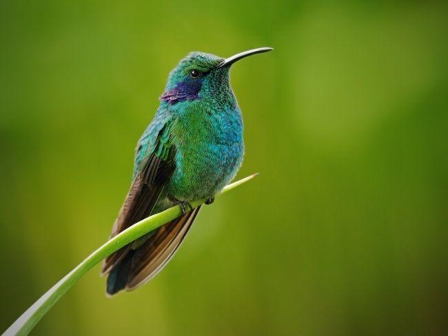 Costa Rica, Rainforest, Bird