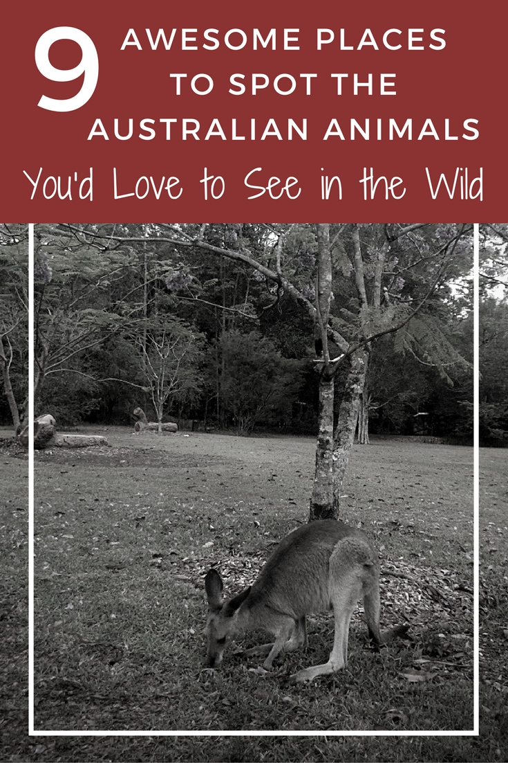 9 Awesome Places to Spot those Classic Australian Animals You'd Love to See in the Wild {Big World Small Pockets}