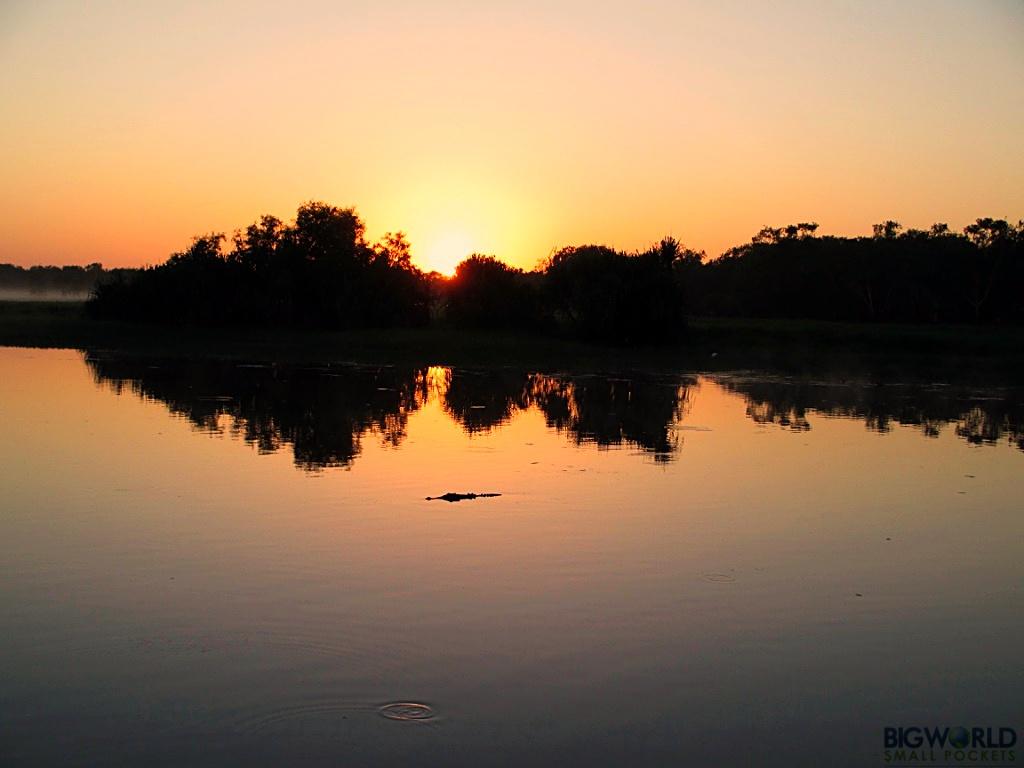 croc-at-dawn