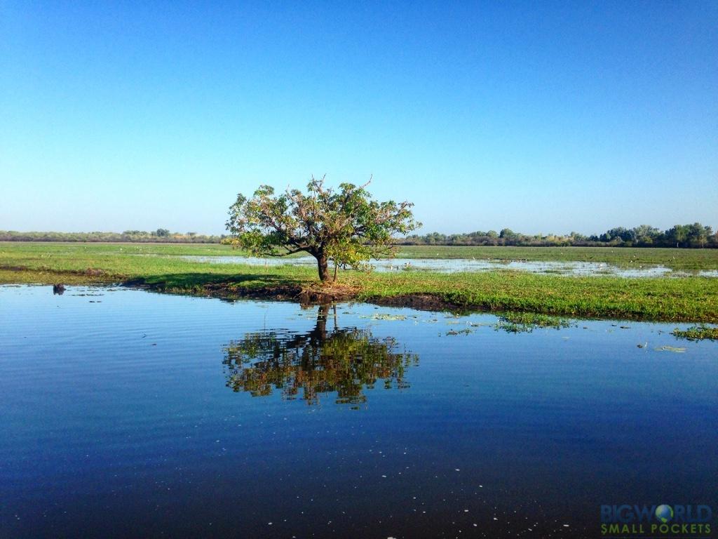 Australia, Kakadu, Yellow Waters River Tree