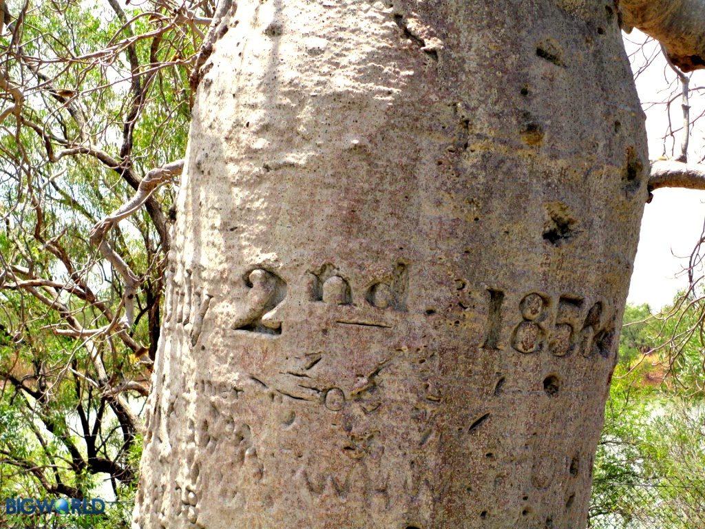 gregorys-tree