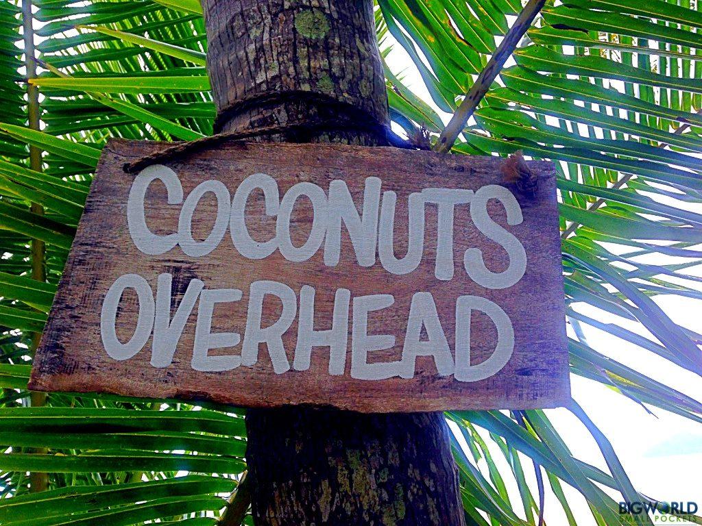 coconuts-overhead