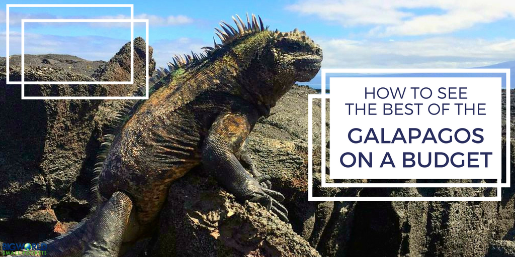 galapagos-on-a-budget