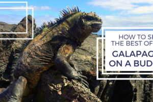 How to See the Best of the Galapagos on a Budget