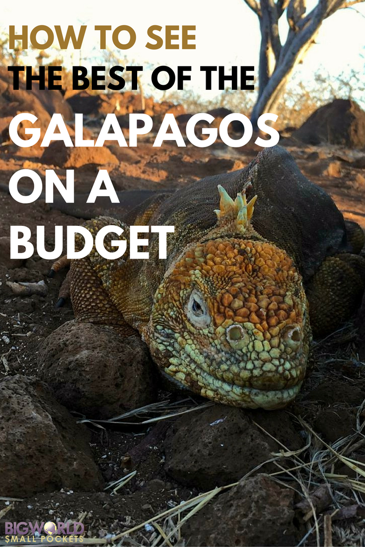 Great Tips to Help You Visit the Galapagos Islands on a Budget {Big World Small Pockets}