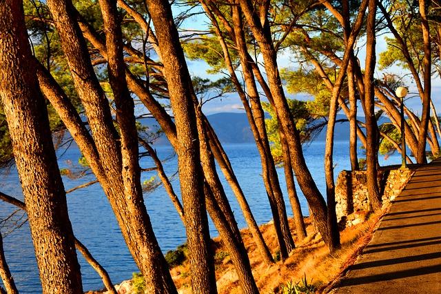 Croatia, Hvar, Trees