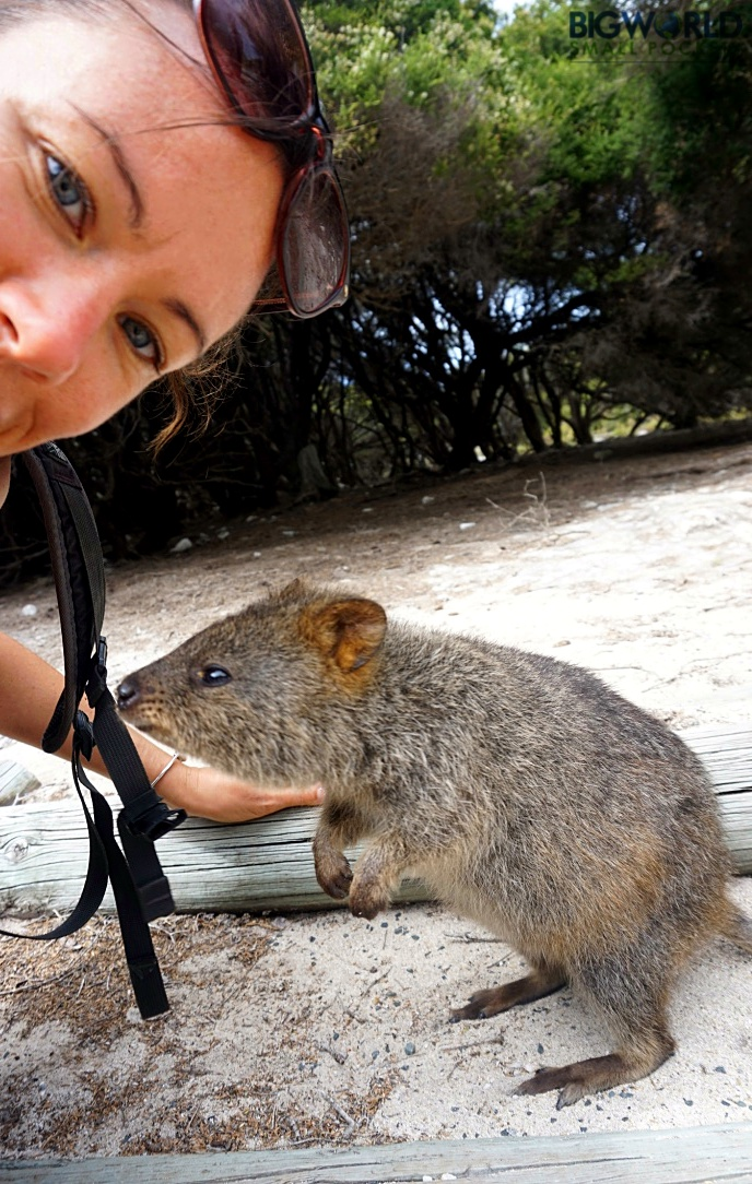 Australia, Rottnest, Quokka Selfie