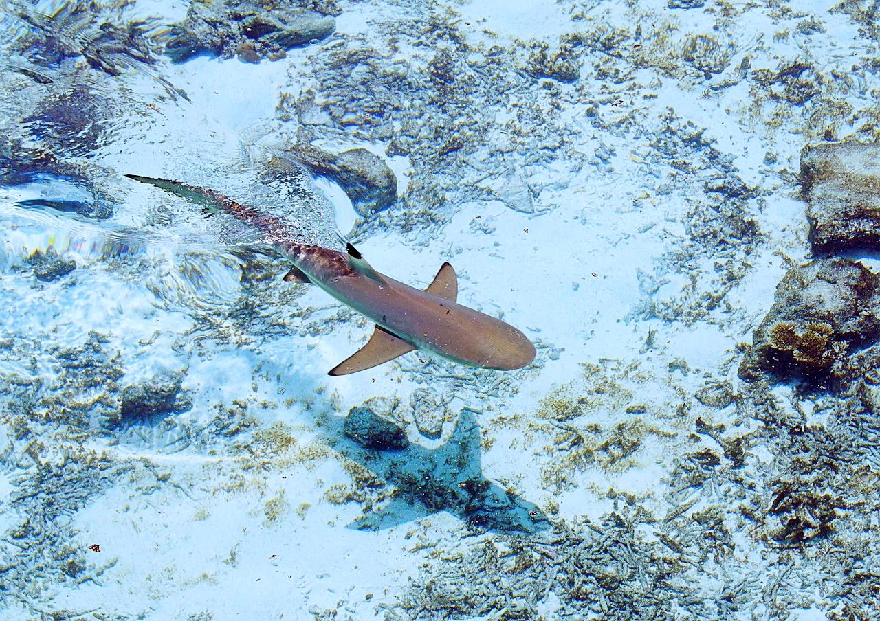 акулы в баренцевом море фото оттенок