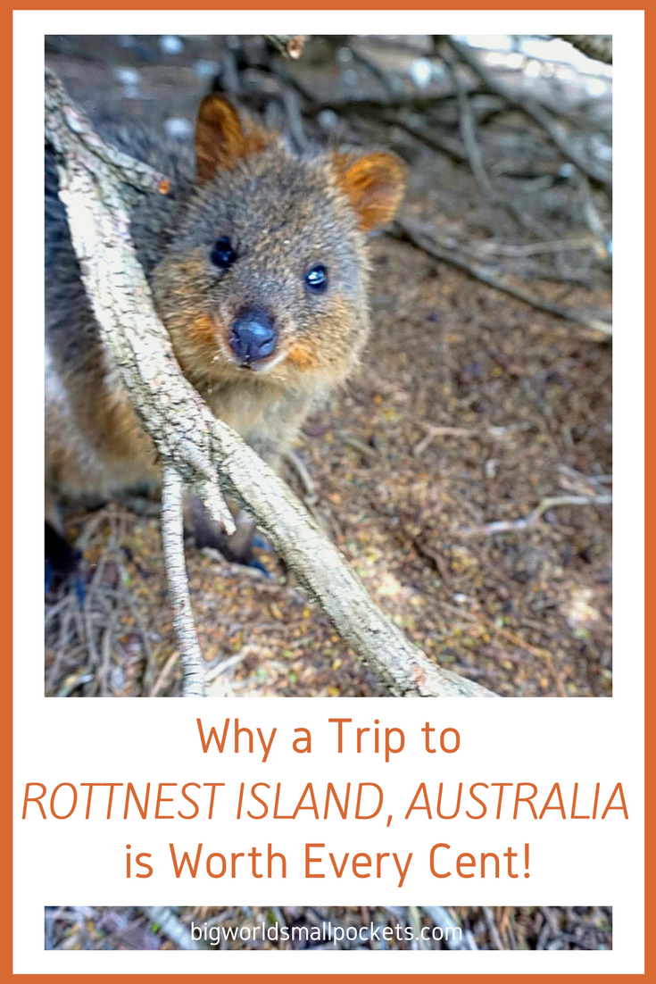 Why a Trip to Rottnest Island, Australia is Worth the Splurge! {Big World Small Pockets}
