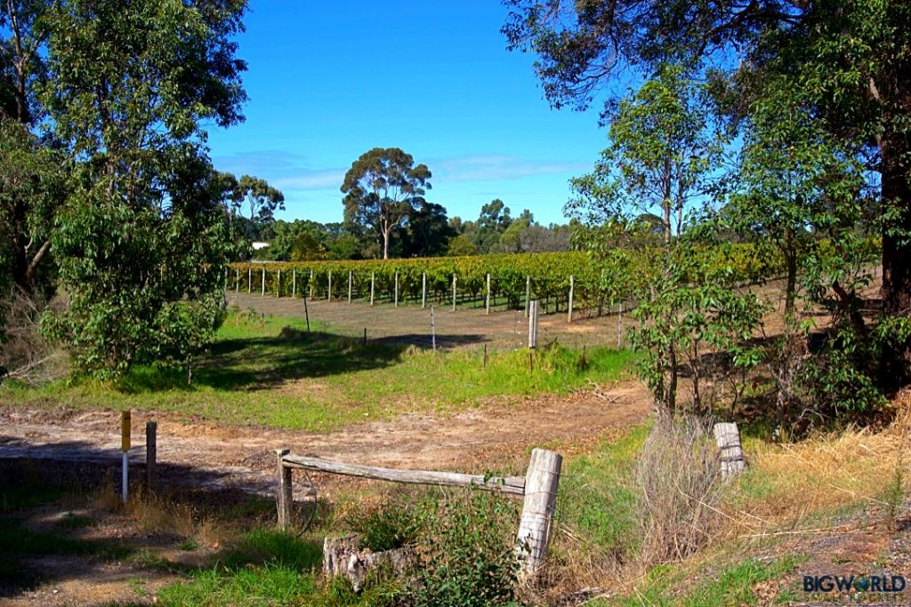 Australia, Margaret River, Vineyard