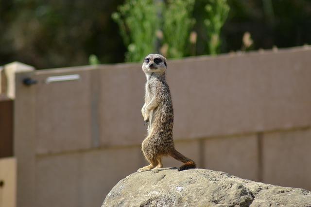 Channel Islands, Jersey, Zoo