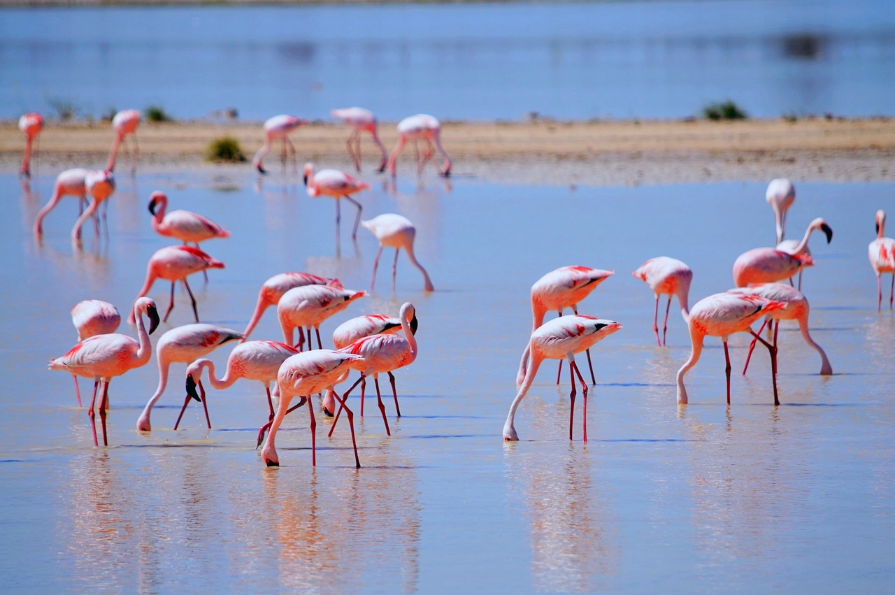 http://www.bigworldsmallpockets.com/wp-content/uploads/2017/07/Etosha-Flamingos.jpg
