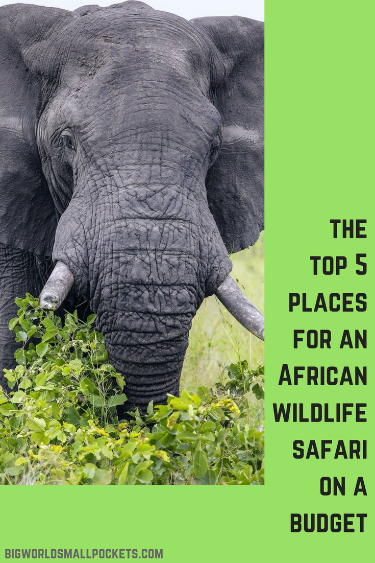 The Top 5 Places for an African Wildlife Safari on a Budget {Big World Small Pockets}
