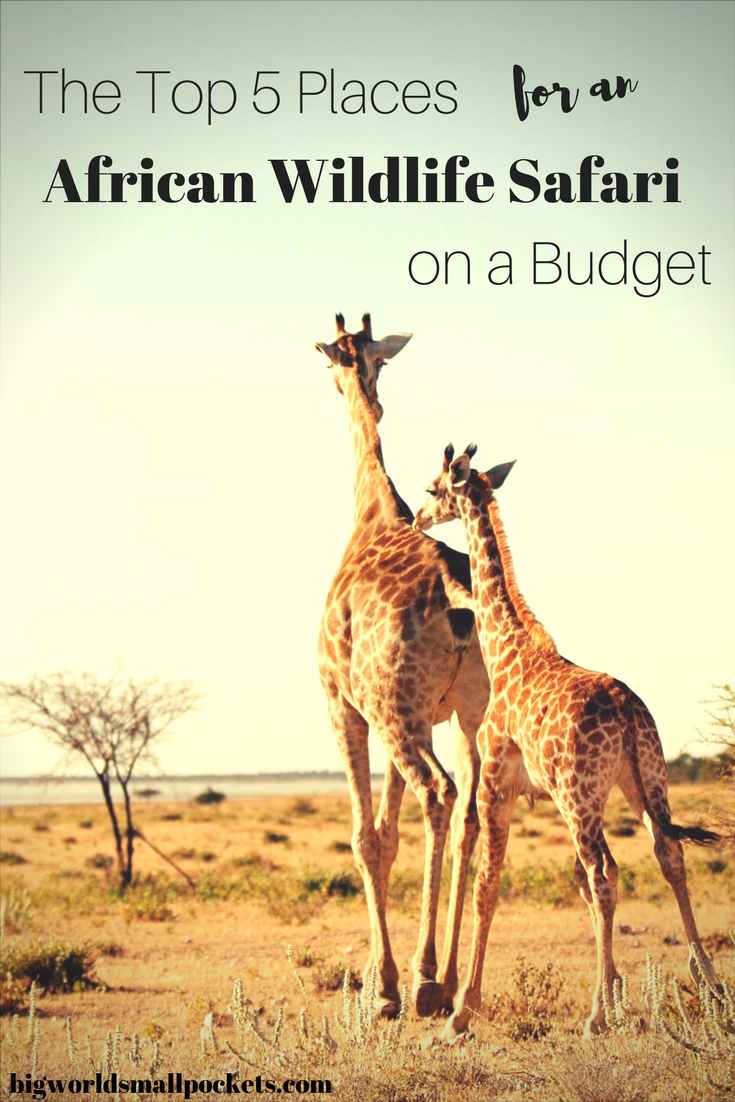 The Top Places for an African Safari on a Budget {Big World Small Pockets}