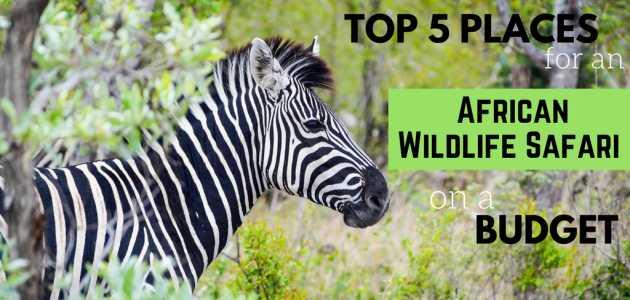 Top 5 Places for an African Wildlife Safari on a Budget
