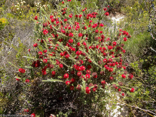 Australia, Turquoise Coast, Wildflowers