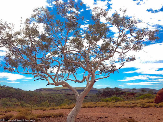 Australia, Karijini, Tree