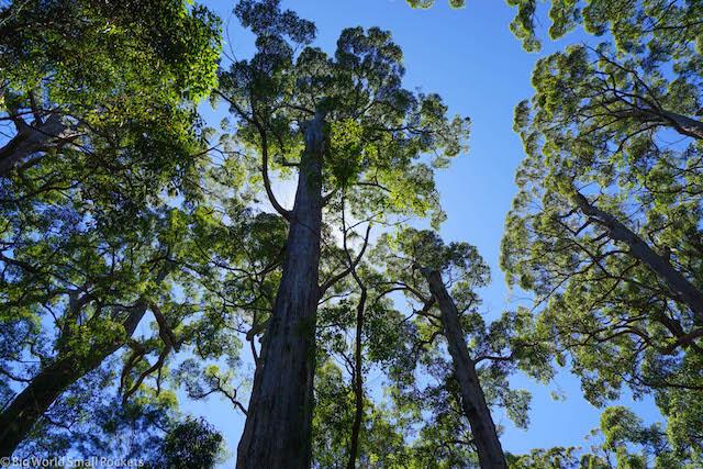 Australia, Pemberton, Karri Forest
